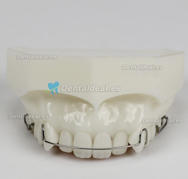 Orthodontic Demonstration Modelo Para Maintenance M3007